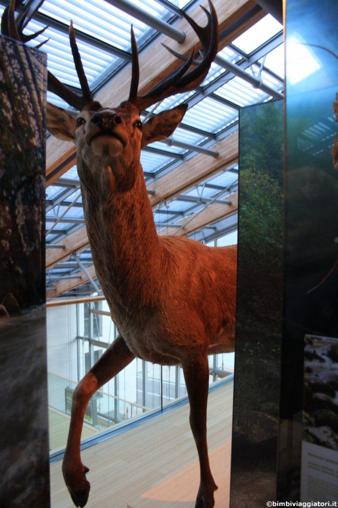 Animali al Muse