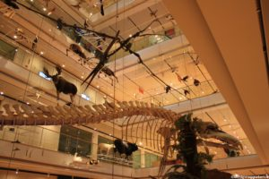 Balena al Muse