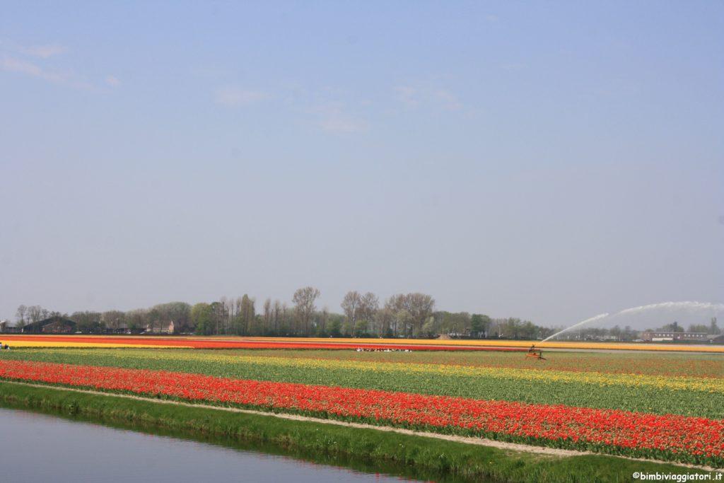Campo Tulipani Olanda