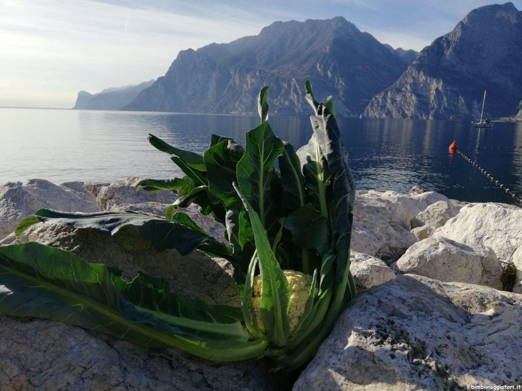 Broccolo-di-Torbole