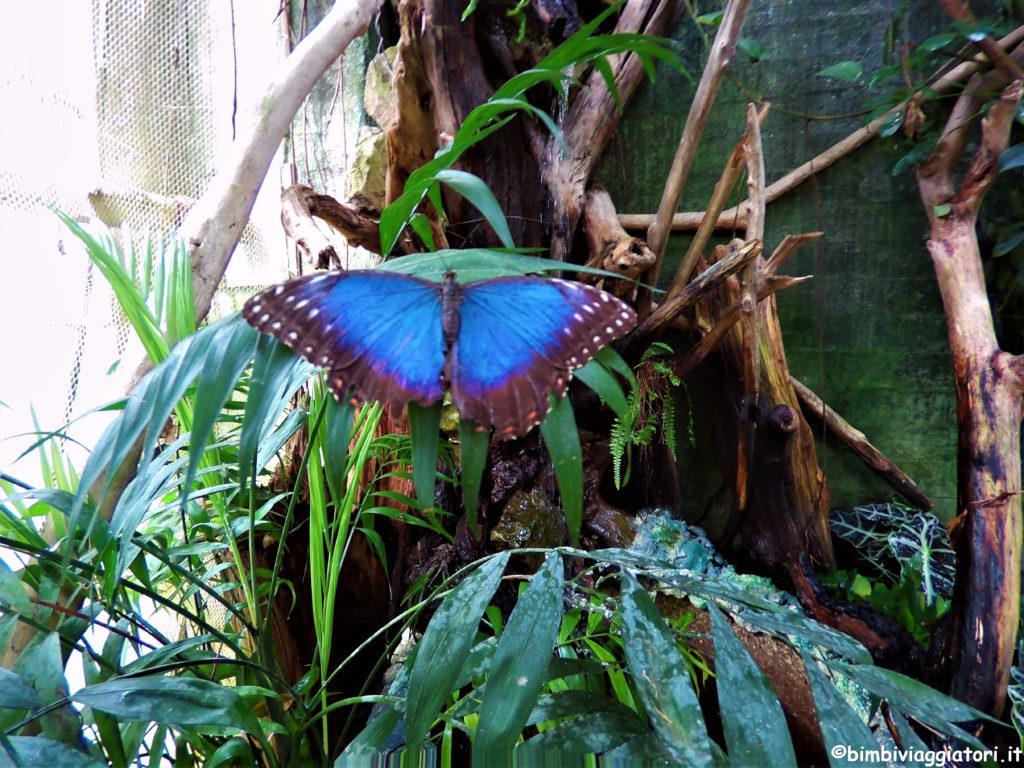 Butterfly house Collodi