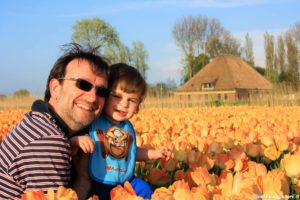 Campi di tulipani Olanda
