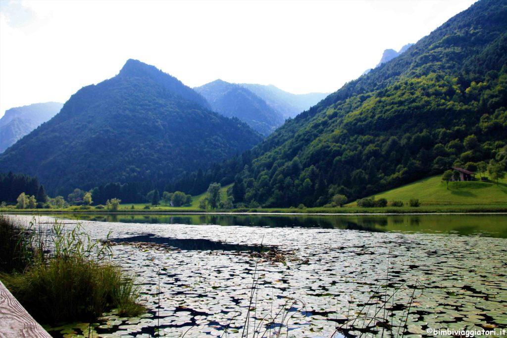 Ninfee al Lago d'Ampola