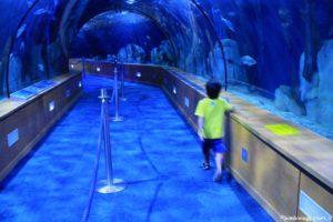 Oceanario con i bambini