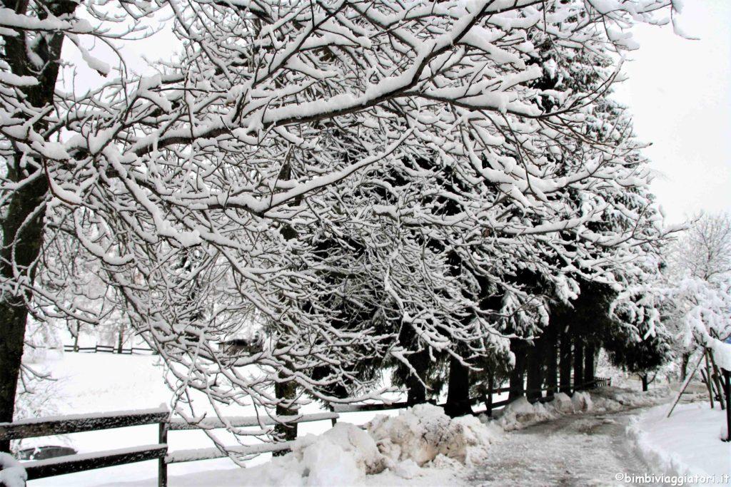 Consigli guida invernale