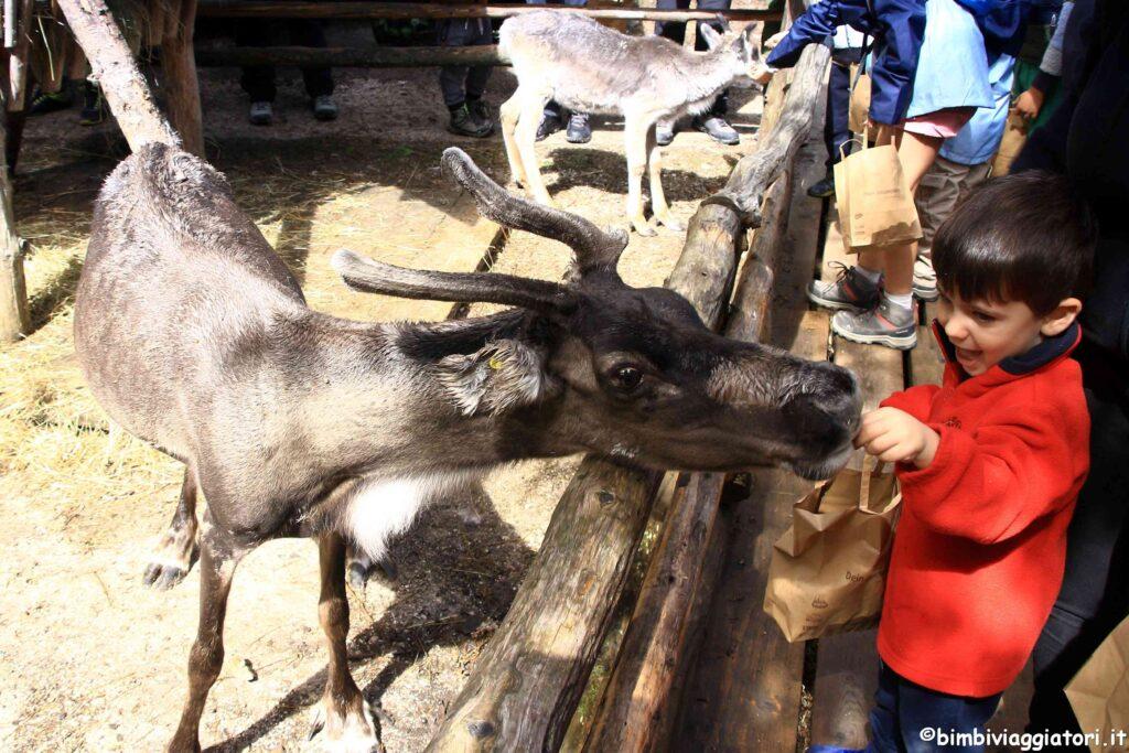 Visita renne Prati di Croda Rossa