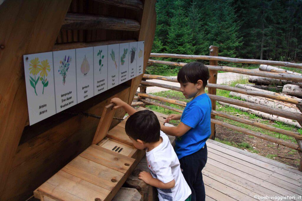 Cosa fare sul Monte Baranci con i bambini