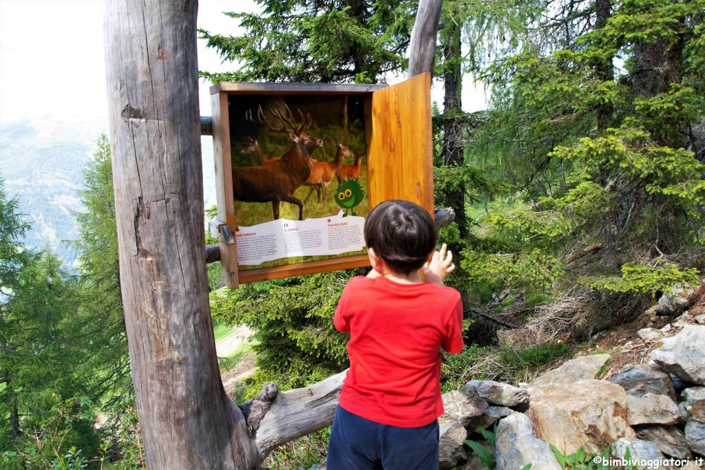 Monte Elmo in Alto Adige con bambini