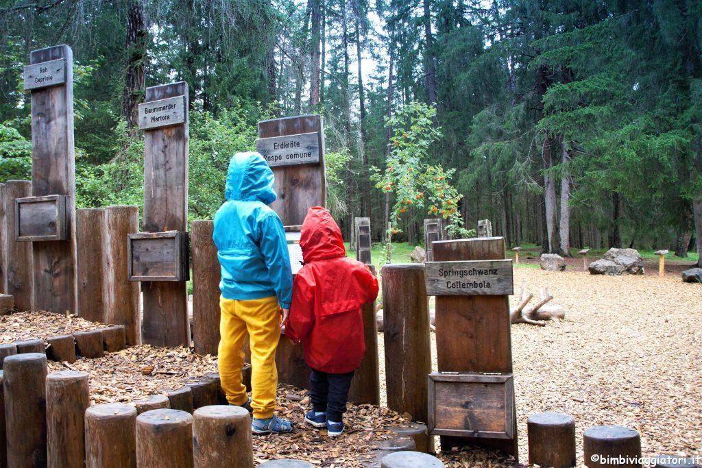Mondo Magico della Foresta con bambini