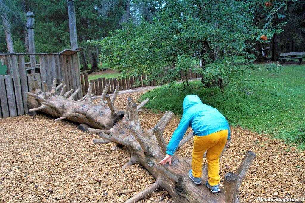 Tronchi albero Mondo Foresta Dobbiaco